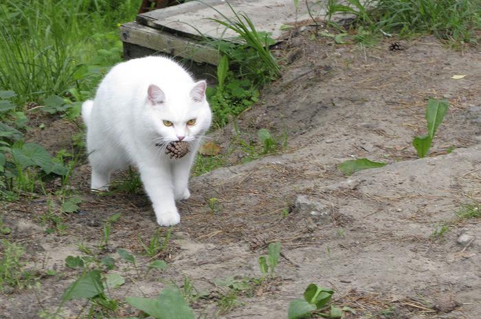 """""""Она выбрала меня - как знала..."""" Необычная история о кошке, которая прислала хозяевам... вторую себя! рис 7"""