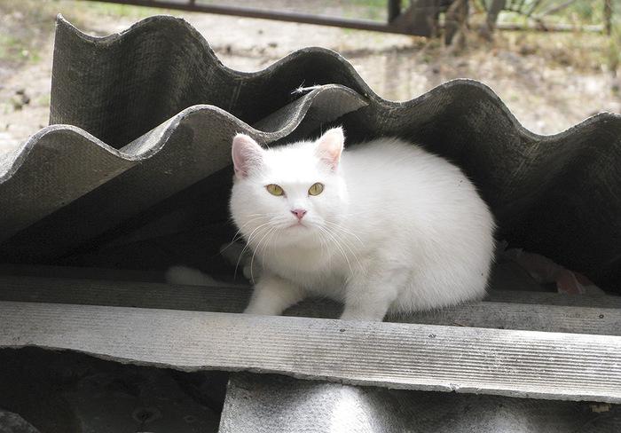 """""""Она выбрала меня - как знала..."""" Необычная история о кошке, которая прислала хозяевам... вторую себя! рис 9"""