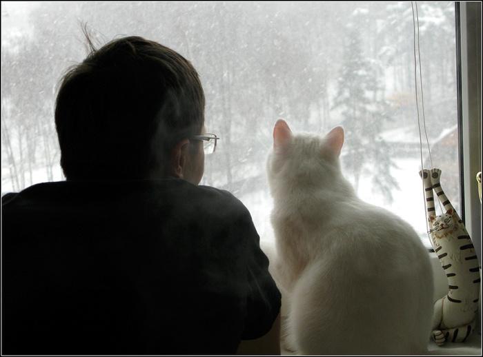 """""""Она выбрала меня - как знала..."""" Необычная история о кошке, которая прислала хозяевам... вторую себя! рис 13"""