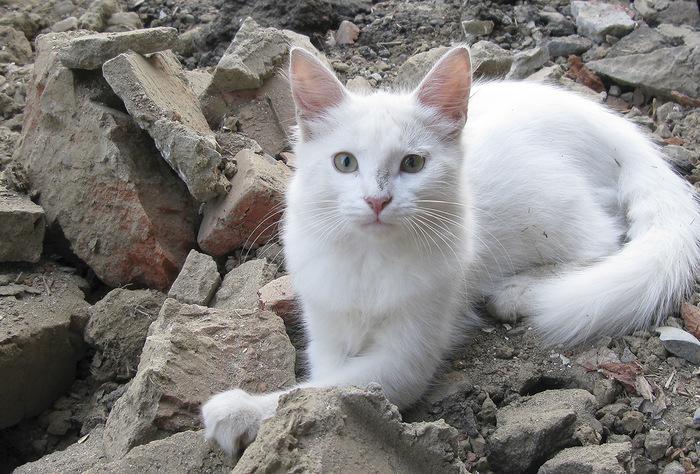"""""""Она выбрала меня - как знала..."""" Необычная история о кошке, которая прислала хозяевам... вторую себя! рис 14"""