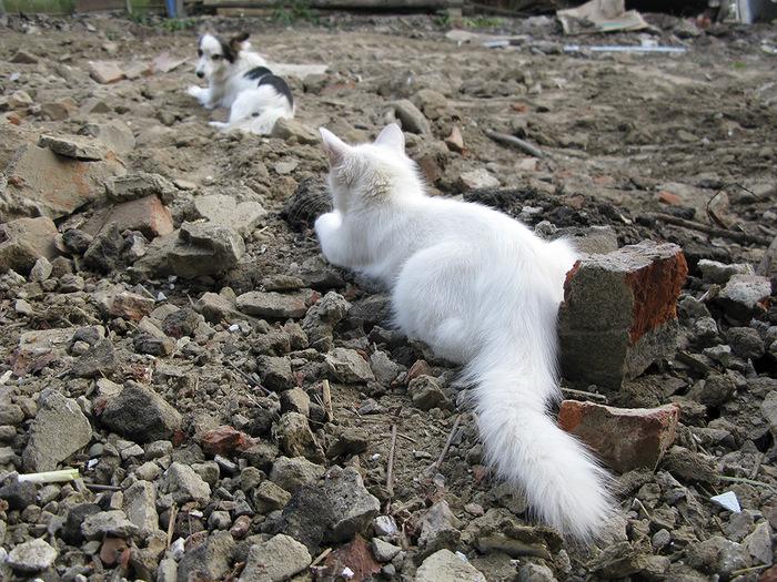 """""""Она выбрала меня - как знала..."""" Необычная история о кошке, которая прислала хозяевам... вторую себя! рис 8"""