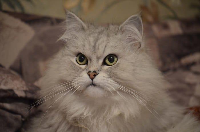 """""""Вы все говорили, что это злой кот. Но у него просто суровая история!"""" Рассказ обиженного хозяина рис 5"""