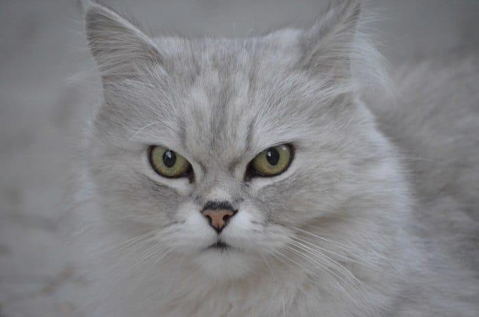 """""""Вы все говорили, что это злой кот. Но у него просто суровая история!"""" Рассказ обиженного хозяина рис 8"""