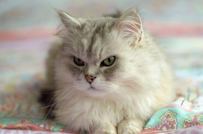 """""""Вы все говорили, что это злой кот. Но у него просто суровая история!"""" Рассказ обиженного хозяина рис 6"""