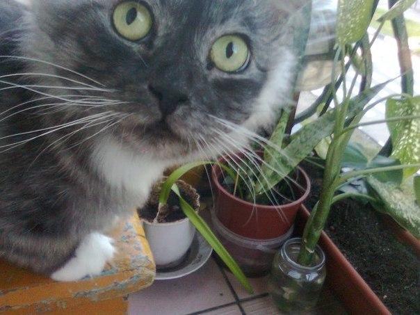 """""""Заберите, он пахнет тухлятиной!"""" Фантастическое превращение кота-отказника в роскошное животное) рис 5"""
