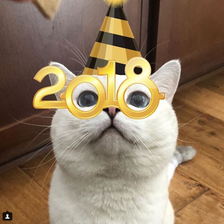 Британский белый кот по кличке Белый Кофе - 11