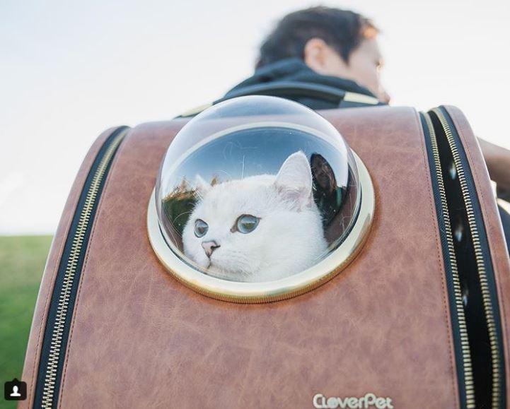 Британский белый кот по кличке Белый Кофе - 5