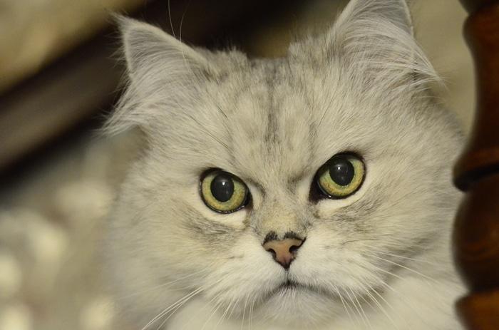 """""""Вы все говорили, что это злой кот. Но у него просто суровая история!"""" Рассказ обиженного хозяина рис 7"""
