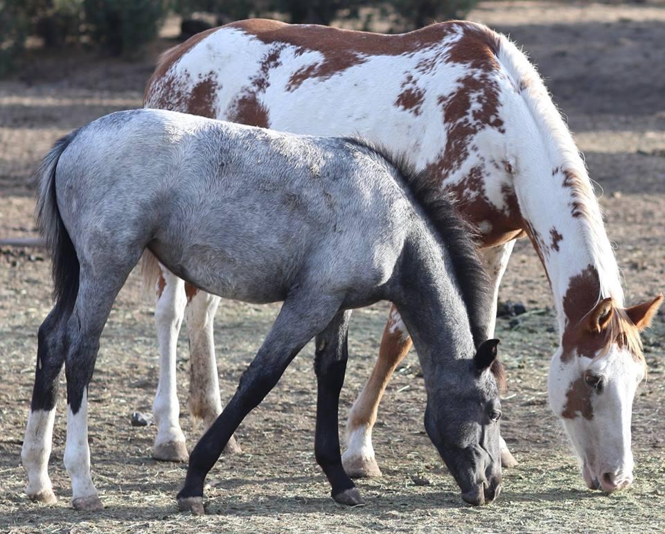 Их разлучили на полгода... Встреча кудрявого коня с его любимой закончилась сюрпризом!)