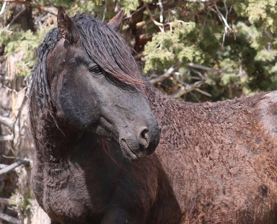 Их разлучили на полгода... Встреча кудрявого коня с его любимой закончилась сюрпризом!) рис 2