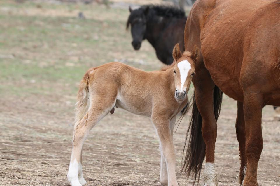 Их разлучили на полгода... Встреча кудрявого коня с его любимой закончилась сюрпризом!) рис 6