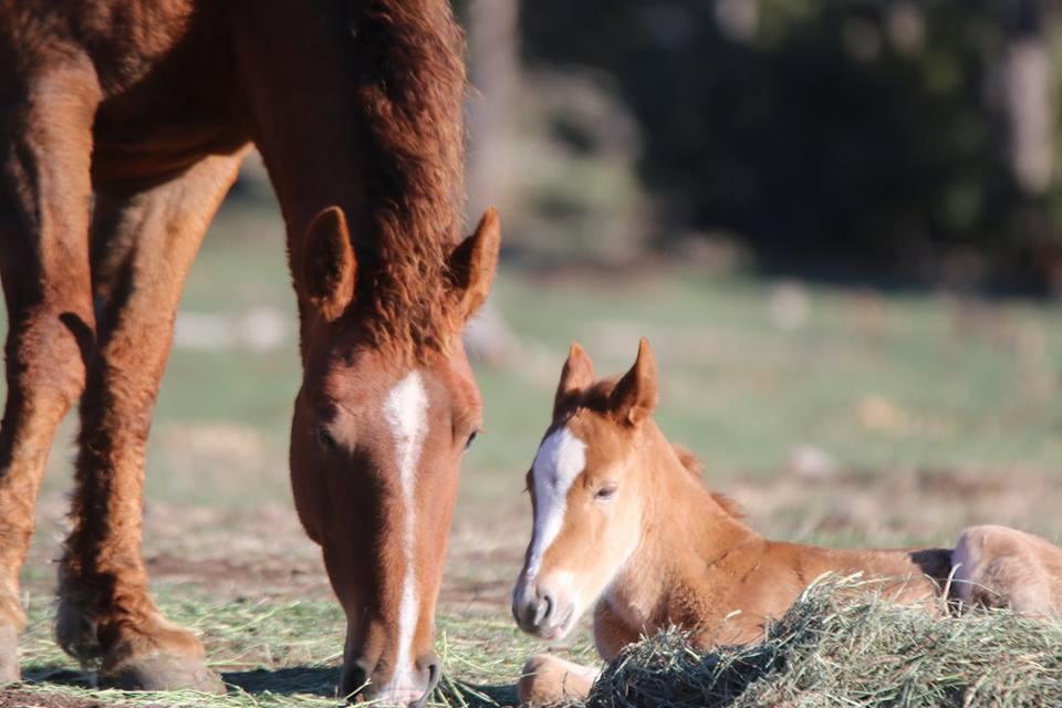 Их разлучили на полгода... Встреча кудрявого коня с его любимой закончилась сюрпризом!) рис 11