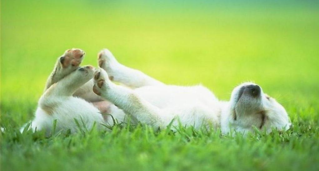 """""""Он появился в будке ниоткуда!"""" Белый щенок с заячьей губой: история для души"""