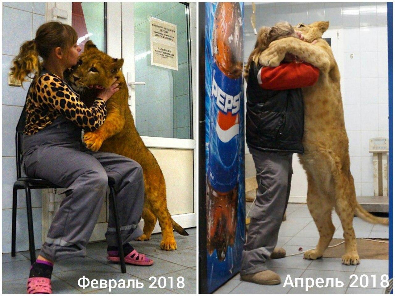 Про диких животных, которые всех удивили! Спасение ослика-сюрприза, молочного медвежонка и йога-львицы! рис 8