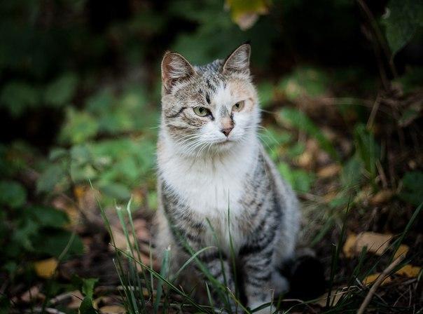 """Днём кошка спала внутри, а на ночь её выставляли на улицу!"" Латифа не ждала любви, но она пришла...)"