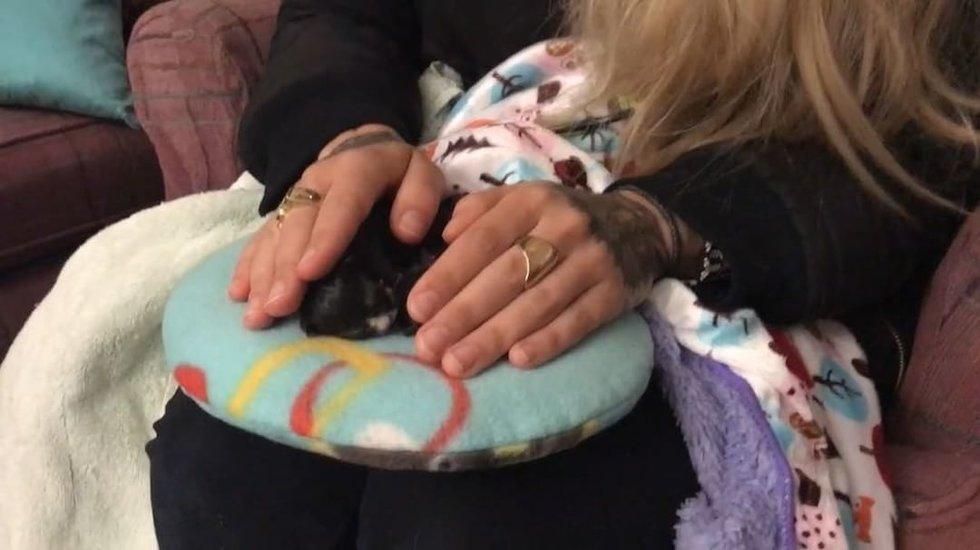 Барсучок задирает лапки... Это радость котёнка, рождённого на полу и поборовшего смерть! рис 3