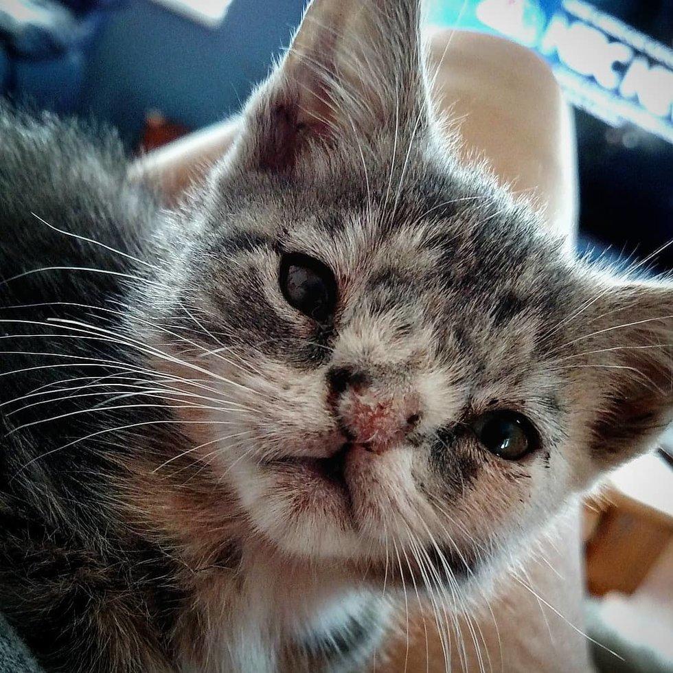 Испуганные глазки, торчащий зубик...  На ступеньках медпункта сидел котёнок и ловил своё Счастье! рис 2