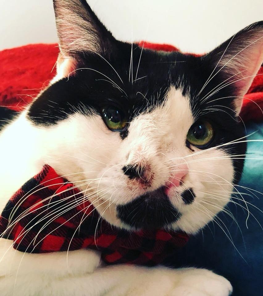 Кот с двумя носами дышит в 2 раза лучше! Мемфис передаёт привет всем, кто хотел его усыпить... рис 3
