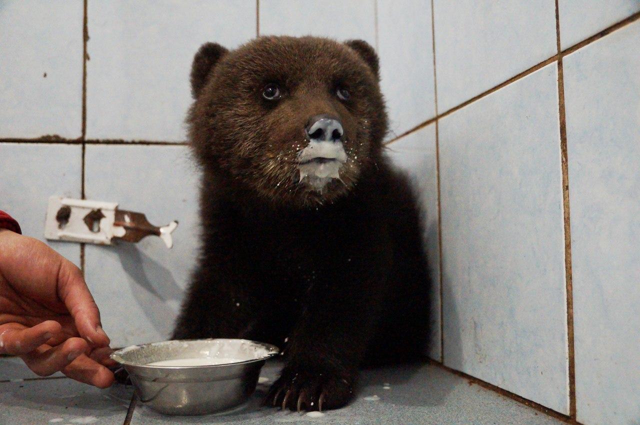 Про диких животных, которые всех удивили! Спасение ослика-сюрприза, молочного медвежонка и йога-львицы! рис 21