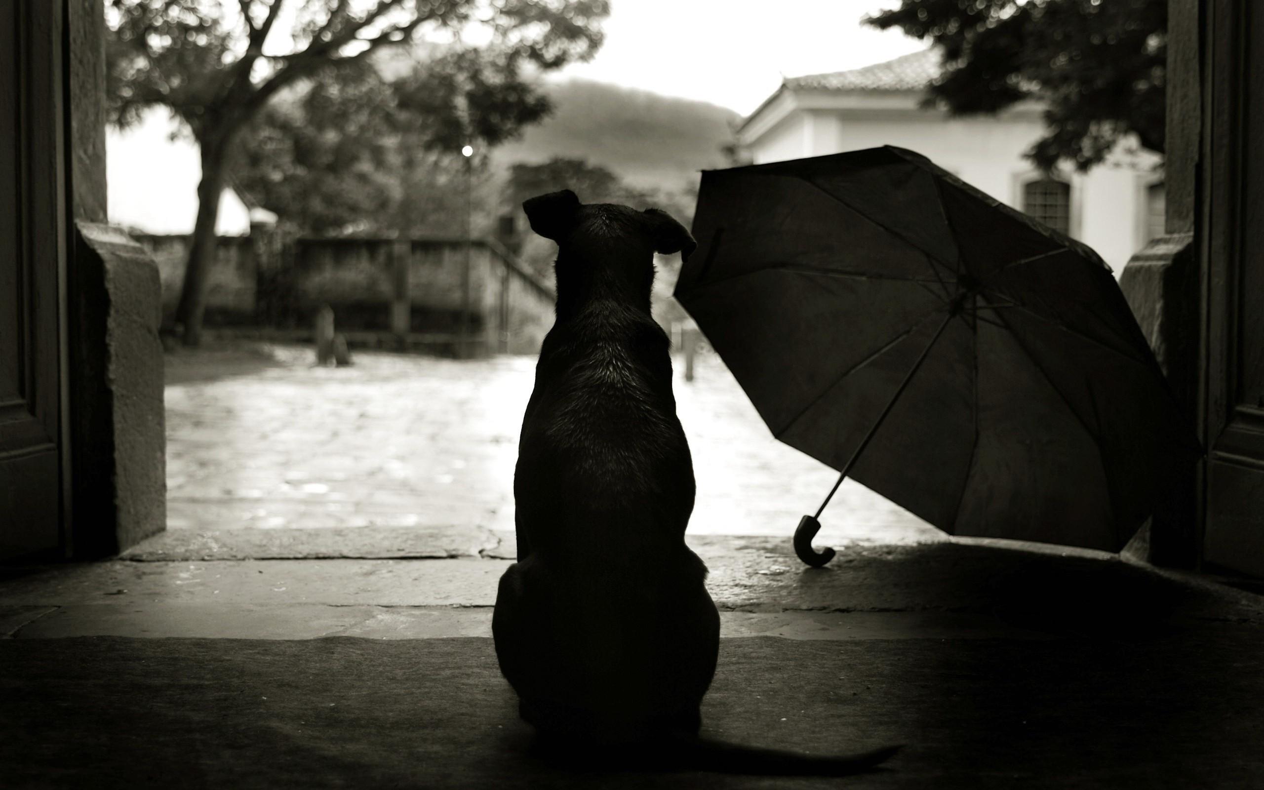 """""""А как же я?"""" Кутя стоял под дождём, шевелил хвостиком-прутиком и разрывал мне душу... рис 3"""