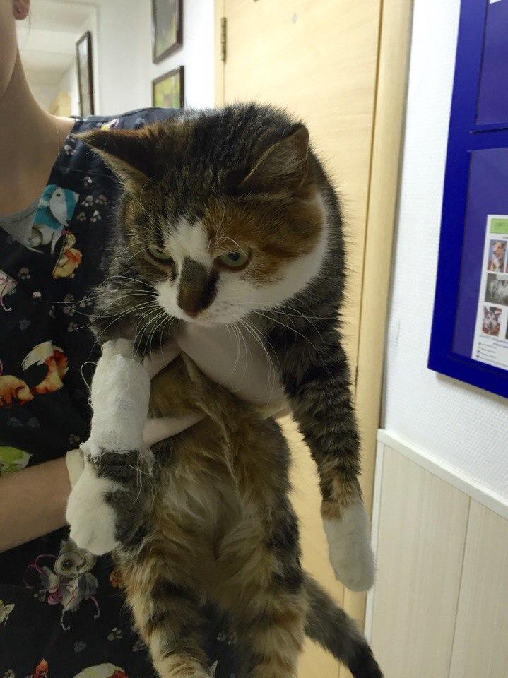 """Днём кошка спала внутри, а на ночь её выставляли на улицу!"" Латифа не ждала любви, но она пришла...) рис 5"