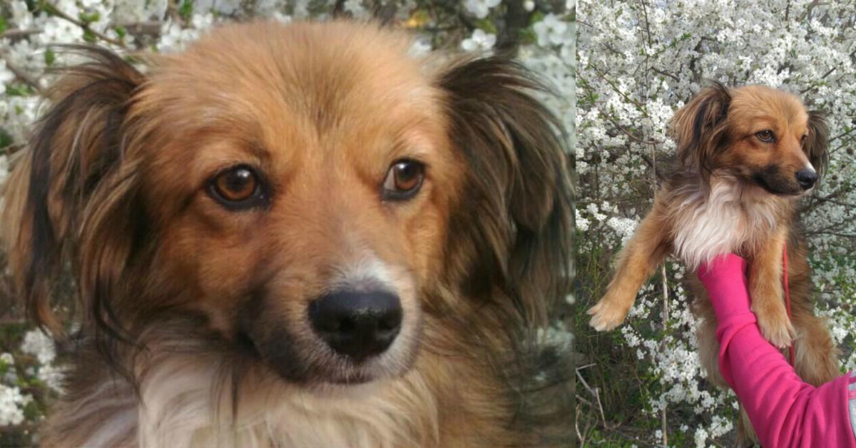 Голодному псу дали сосиску, а он... отнёс её кошке! История бездомного Вайзика с ушами-бабочками рис 9