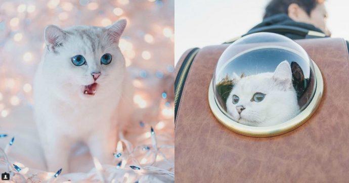 Британский белый кот по кличке Белый Кофе - 15 рис 2