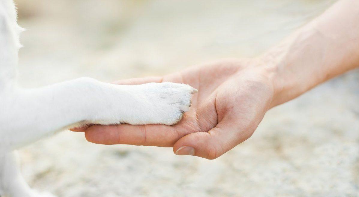 """""""Он появился в будке ниоткуда!"""" Белый щенок с заячьей губой: история для души рис 2"""