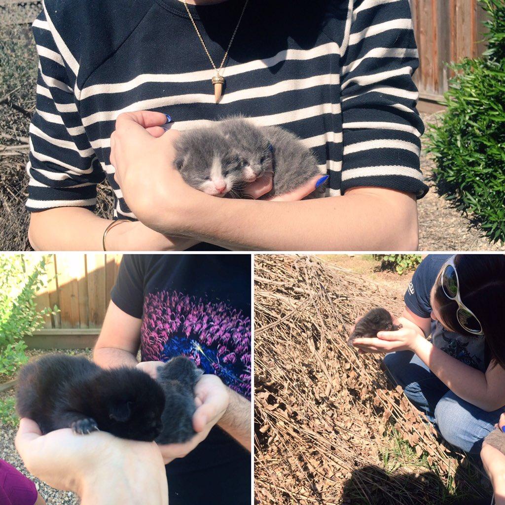 Удивительная находка - прямо на Пасху! Праздничная история о котиках, которые прикинулись... конфетами!) рис 3