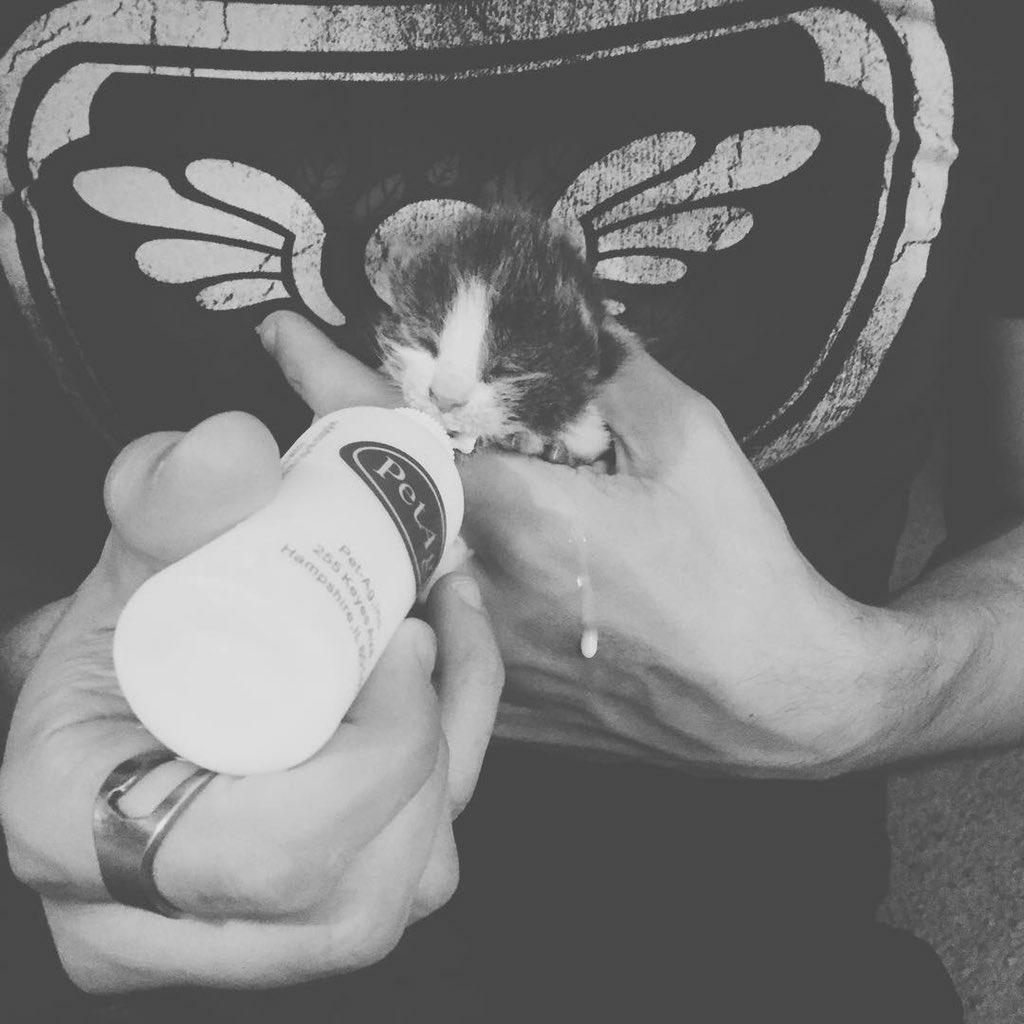 Удивительная находка - прямо на Пасху! Праздничная история о котиках, которые прикинулись... конфетами!) рис 4