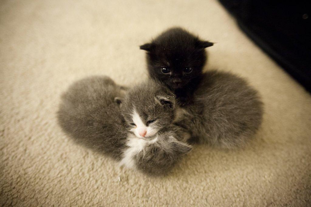 Удивительная находка - прямо на Пасху! Праздничная история о котиках, которые прикинулись... конфетами!) рис 2
