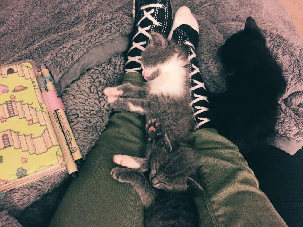 Удивительная находка - прямо на Пасху! Праздничная история о котиках, которые прикинулись... конфетами!) рис 10