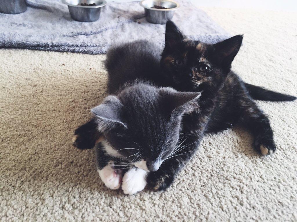 Удивительная находка - прямо на Пасху! Праздничная история о котиках, которые прикинулись... конфетами!) рис 7