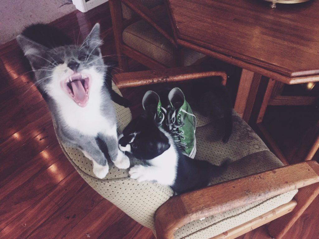 Удивительная находка - прямо на Пасху! Праздничная история о котиках, которые прикинулись... конфетами!) рис 8