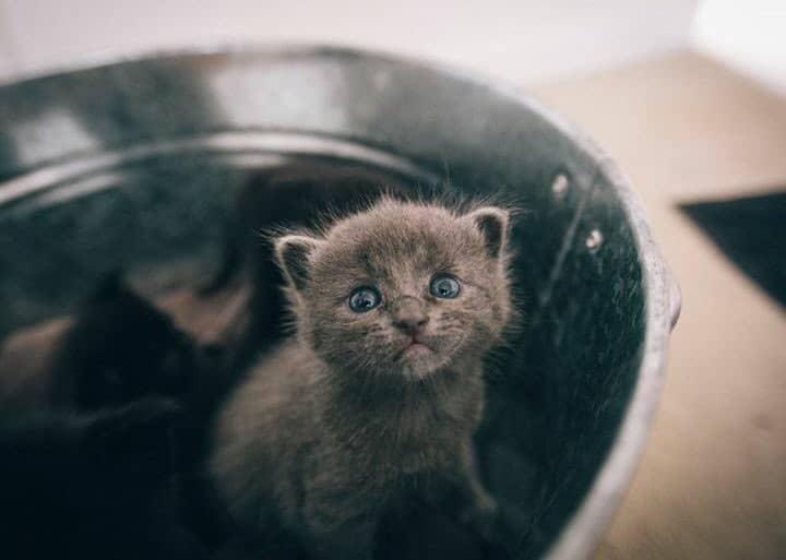 Удивительная находка - прямо на Пасху! Праздничная история о котиках, которые прикинулись... конфетами!) рис 12