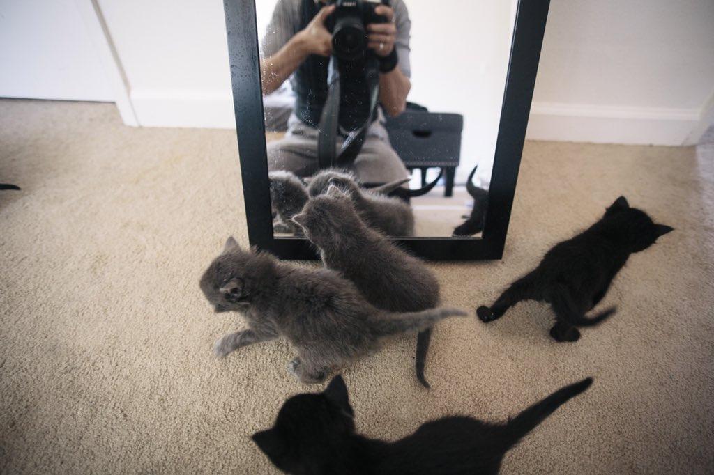 Удивительная находка - прямо на Пасху! Праздничная история о котиках, которые прикинулись... конфетами!) рис 13