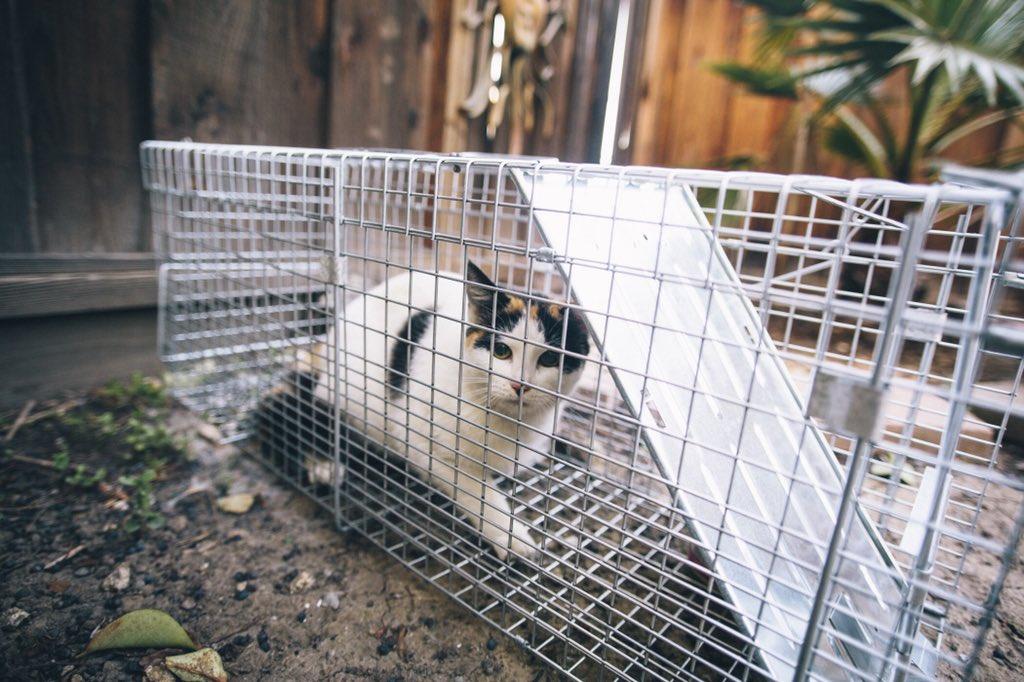 Удивительная находка - прямо на Пасху! Праздничная история о котиках, которые прикинулись... конфетами!) рис 14