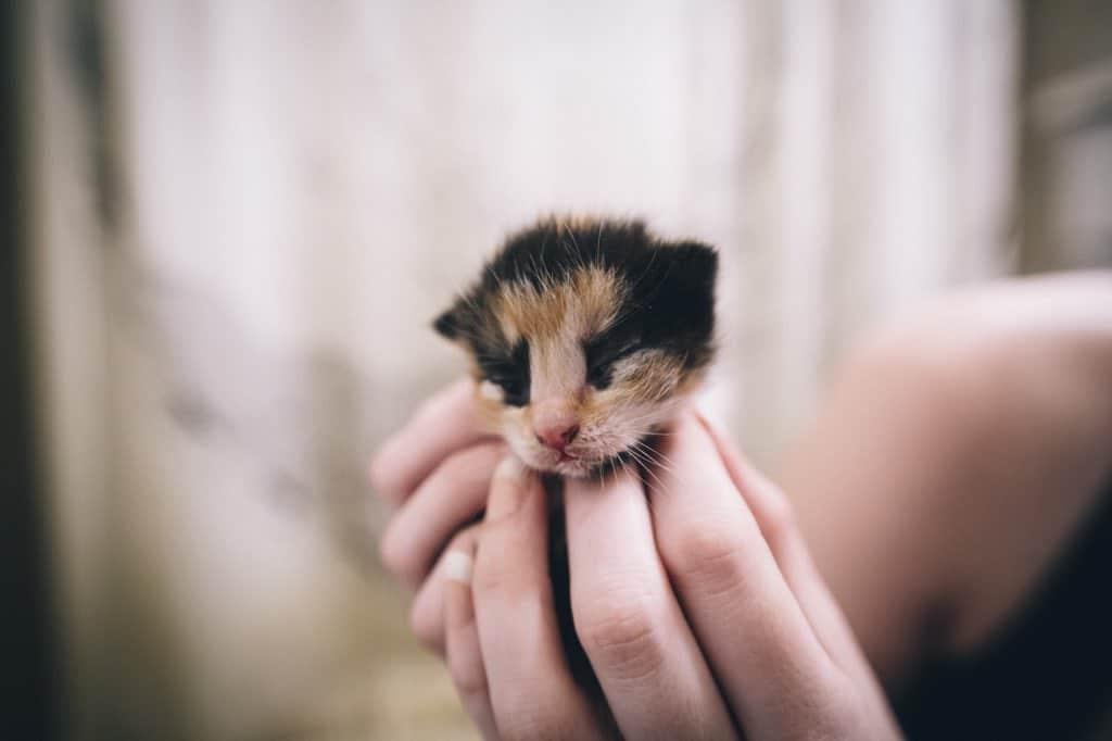 Удивительная находка - прямо на Пасху! Праздничная история о котиках, которые прикинулись... конфетами!) рис 19