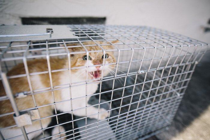 Удивительная находка - прямо на Пасху! Праздничная история о котиках, которые прикинулись... конфетами!) рис 16