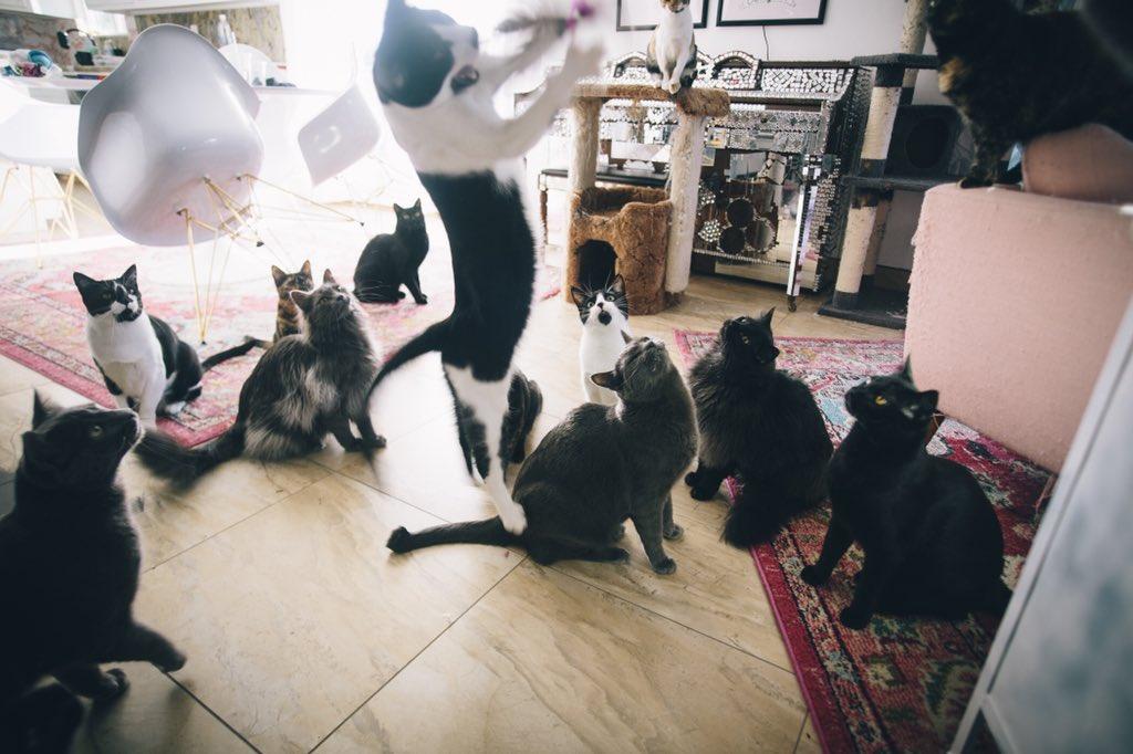 Удивительная находка - прямо на Пасху! Праздничная история о котиках, которые прикинулись... конфетами!) рис 20