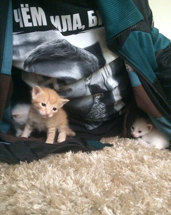 """""""Беременная глухая кошка с Авито? Рискнём!"""" Никому не нужная мать оказалась чудом) рис 10"""