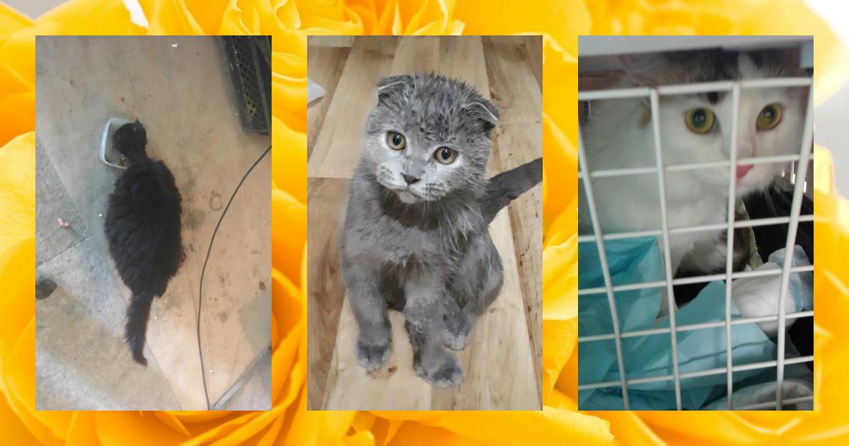 3 самые трогательные апрельские кото-истории: с улицы - в тёплый дом! :)