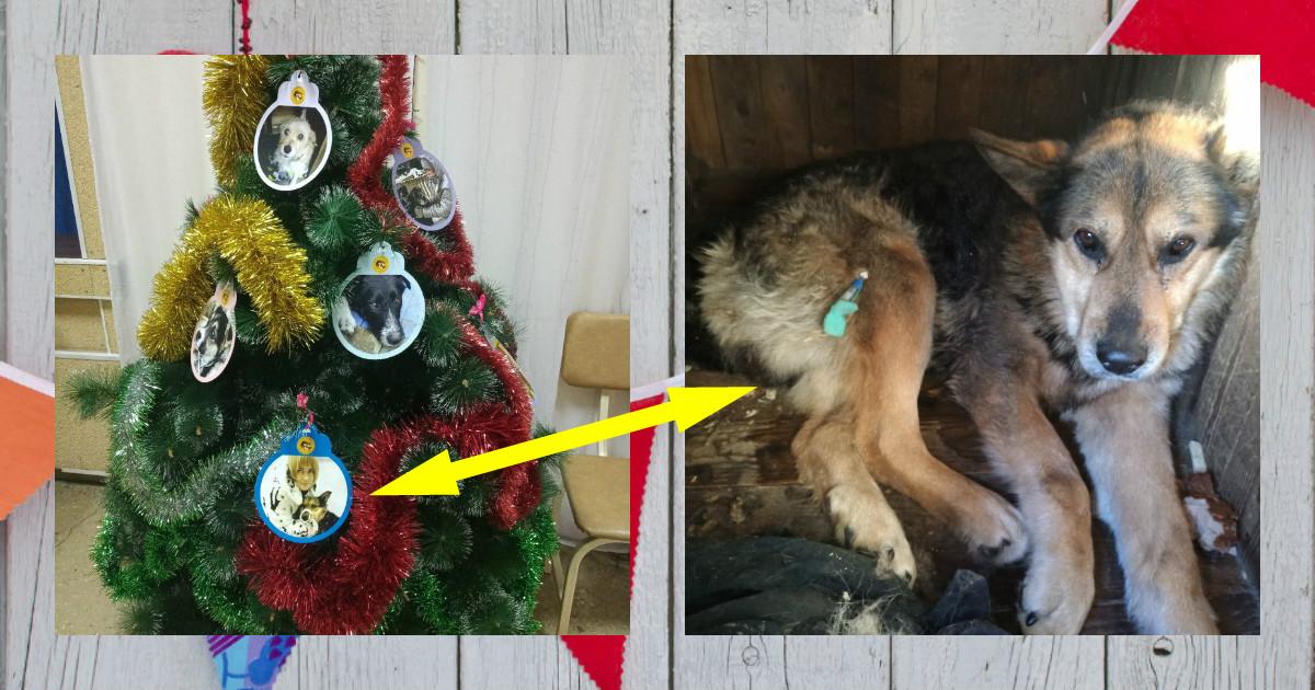 Женщина замерла, рассматривая фотографию пса... Через минуту волонтёры узнали, что произошло Чудо!