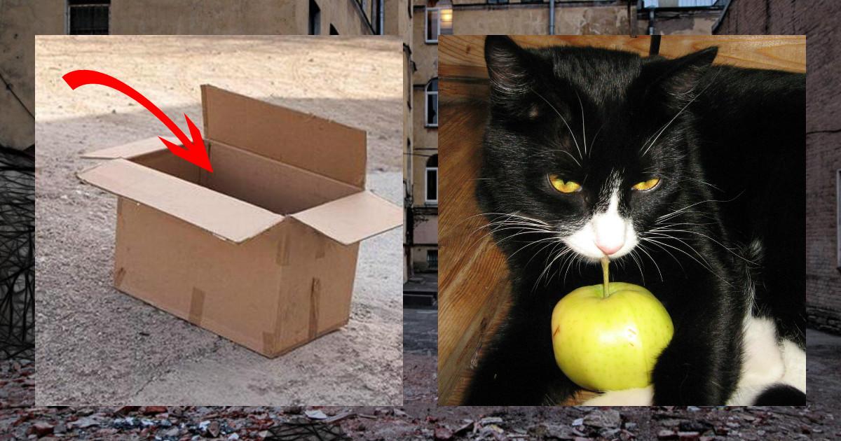 """""""А под курткой - сюрприз!"""" Мужчина гулял с собакой и увидел коробку, где кто-то шевелился!"""