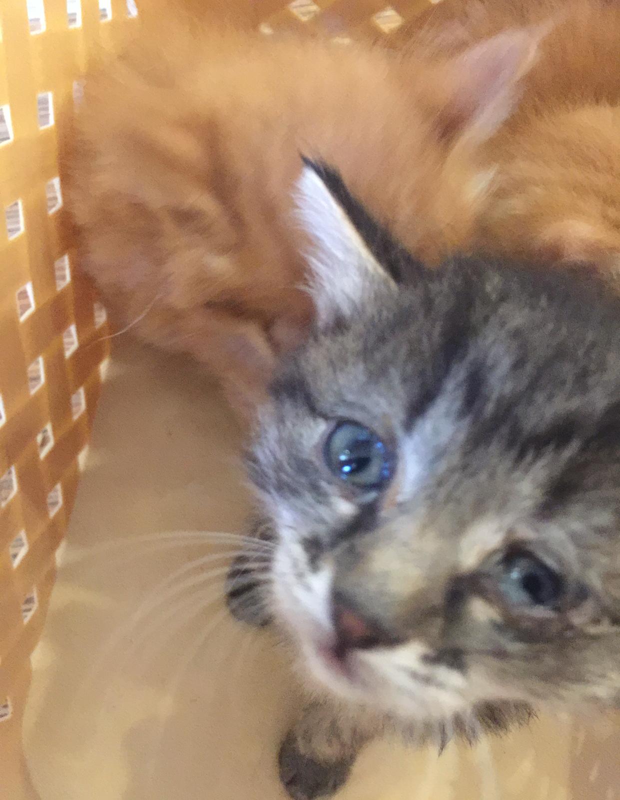Маленьких котят нашли на детской площадке... Спасение таких малышей - дело нелёгкое! рис 4