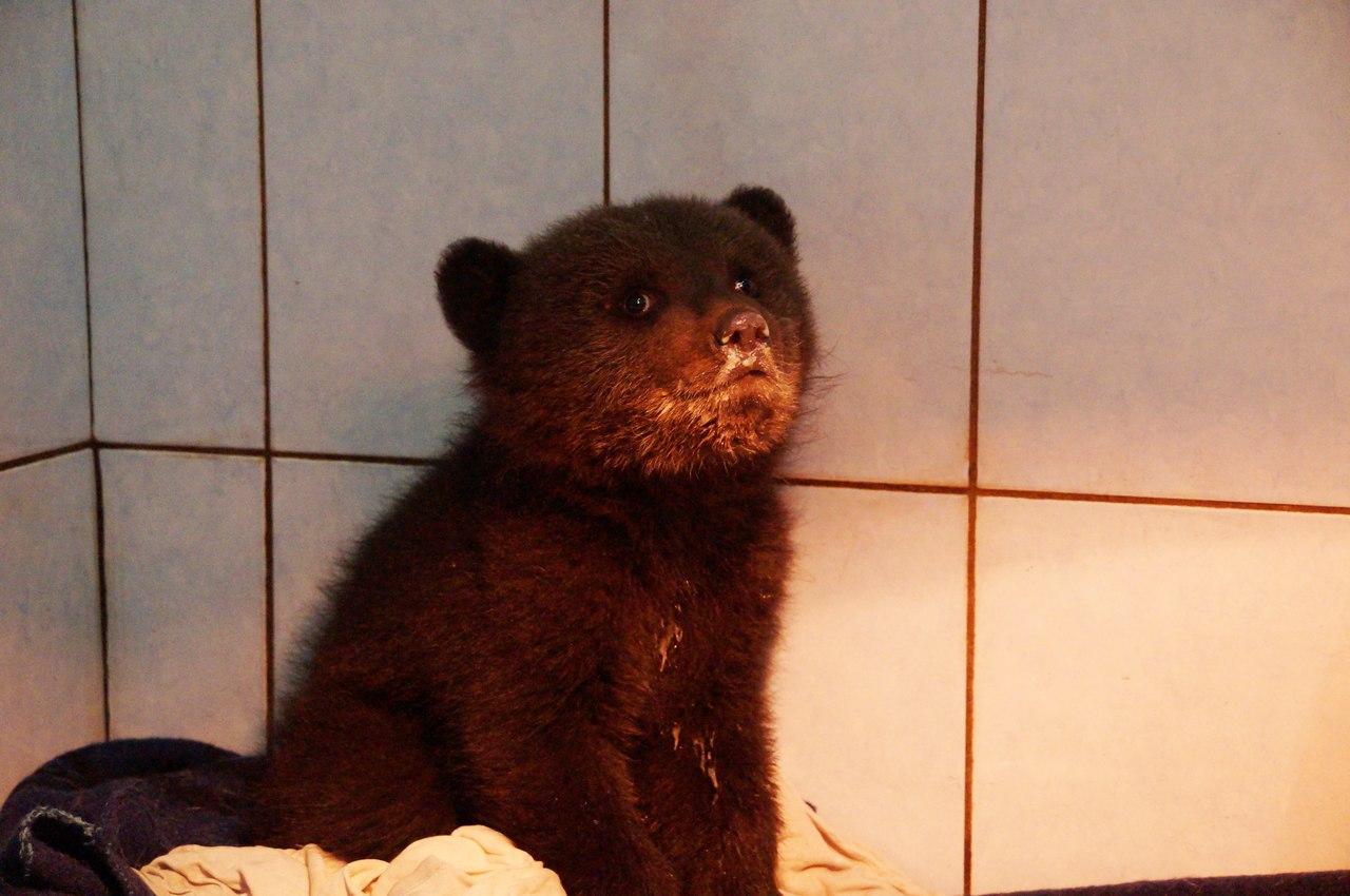 Про диких животных, которые всех удивили! Спасение ослика-сюрприза, молочного медвежонка и йога-львицы! рис 19