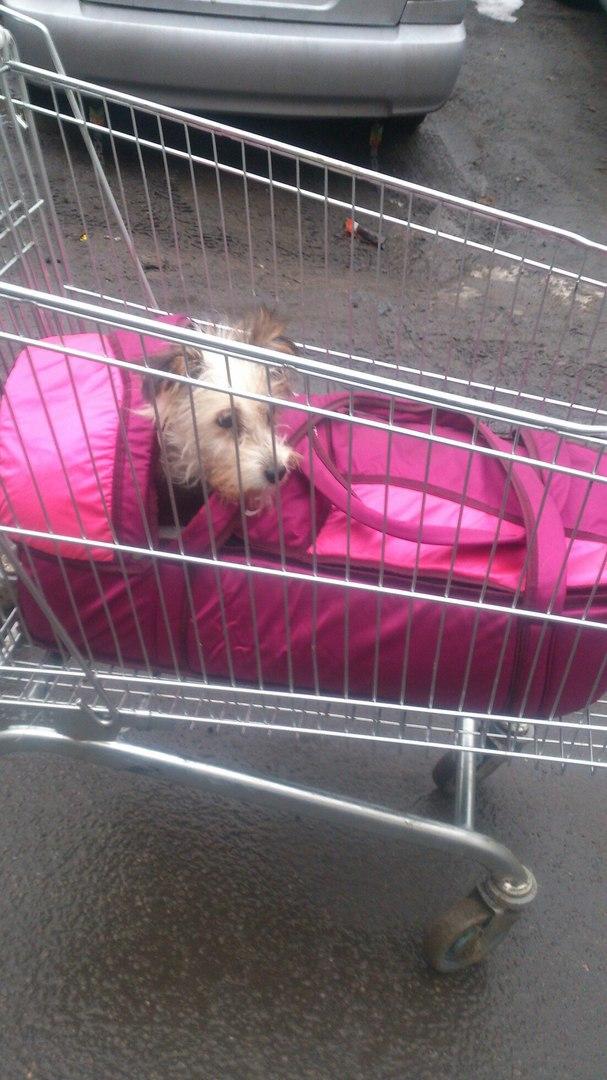 """Казявочка носила на себе огромный """"мешок""""! А теперь брошенную собаку... саму носят на руках :) рис 15"""