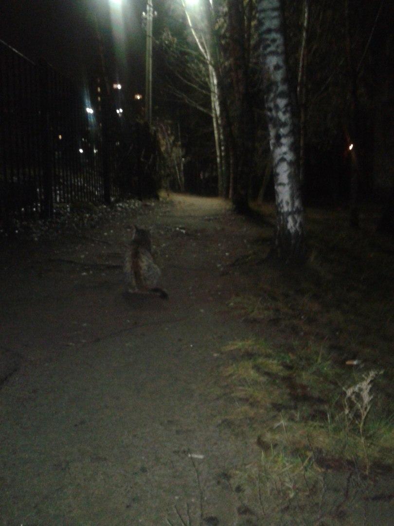 """Днём кошка спала внутри, а на ночь её выставляли на улицу!"" Латифа не ждала любви, но она пришла...) рис 2"
