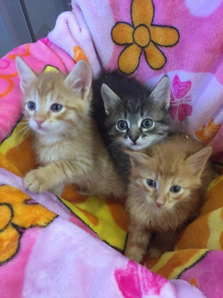 Маленьких котят нашли на детской площадке... Спасение таких малышей - дело нелёгкое! рис 6