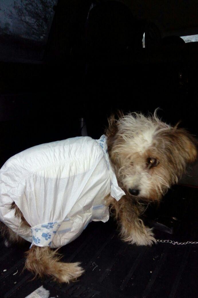 """Казявочка носила на себе огромный """"мешок""""! А теперь брошенную собаку... саму носят на руках :) рис 6"""